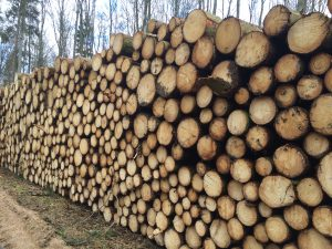 Holz für Leiße Sägewerk und Holzhandel GmbH