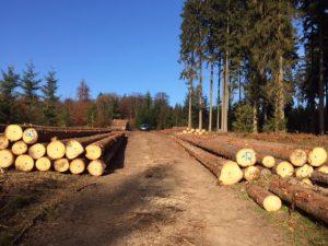 Frisch geschlagenes Holz